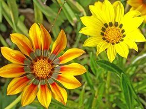 Pour un jardin fleuri tout l'été...